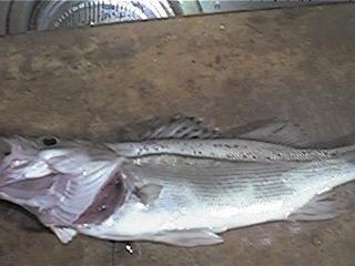 fishing161.jpg